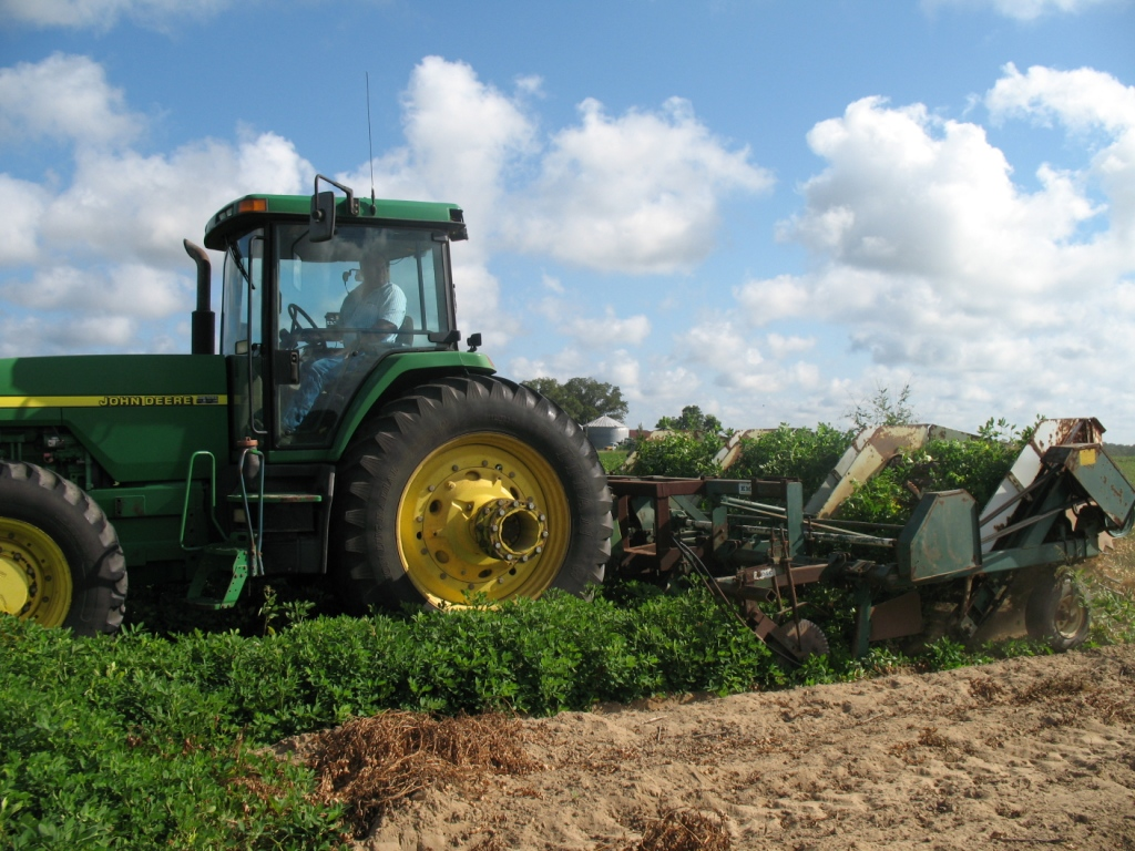 """Turning peanuts"" from the soil is which they grow is just one part of a peanut farmers season long profession of growing, harvesting, and marketing this abundant agricultural product."