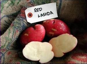 EDIS Red LaSoda
