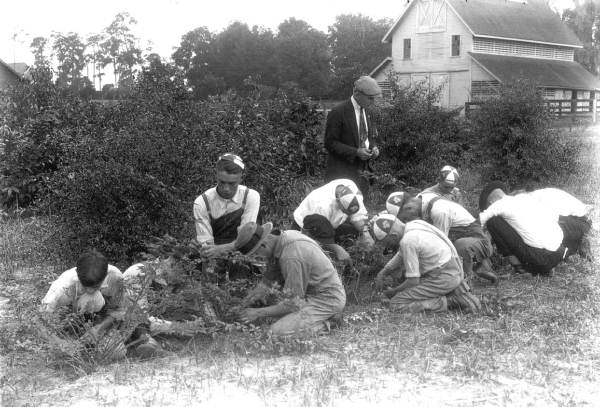 Teaching 4-H youth the science of grafting and budding.  Photo Credit: State Archives of Florida, Florida Memory, http://floridamemory.com/items/show/63198