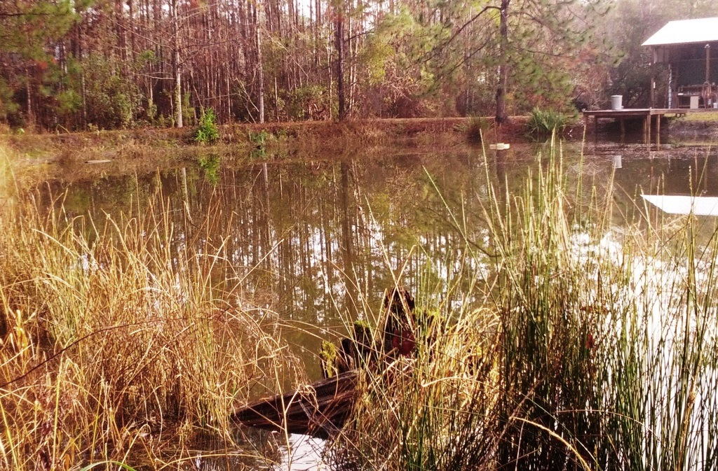 Your pond may seem dormant in our icy winters, but it's a good time to think about next year's aquatic plant management.  Photo by Judy Ludlow