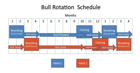 The schedule shows how it is possible for two small herds to utilize one bull; allowing for the implementation of a defined breeding/calving season. The schedule can be adjusted to begin with whatever month the producers desire.
