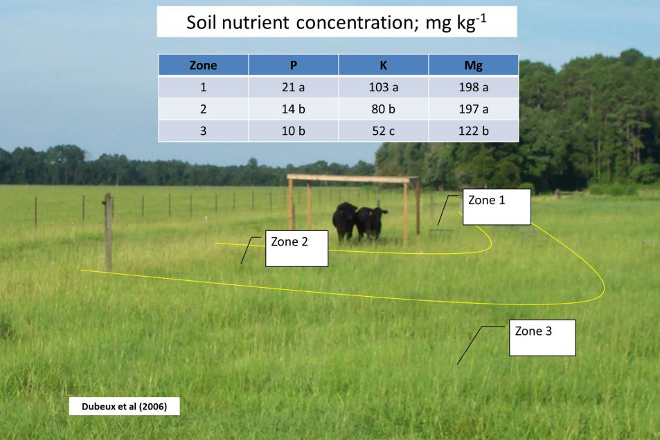 Figure 1. Soil nutrient concentration at different pasture locations according to the distance from shade and water; zone 1 is the closest zone to shade and water, zone 2 is an intermediate zone, and zone 3 is the remaining area of the pasture (Dubeux et al., 2006).