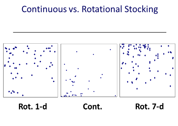 Figure 2. Dung spatial distribution on rotationally stocked (1-d and 7-d of grazing period and 21-d of resting period) and continuously stocked bahiagrass pastures. (Dubeux, 2005).