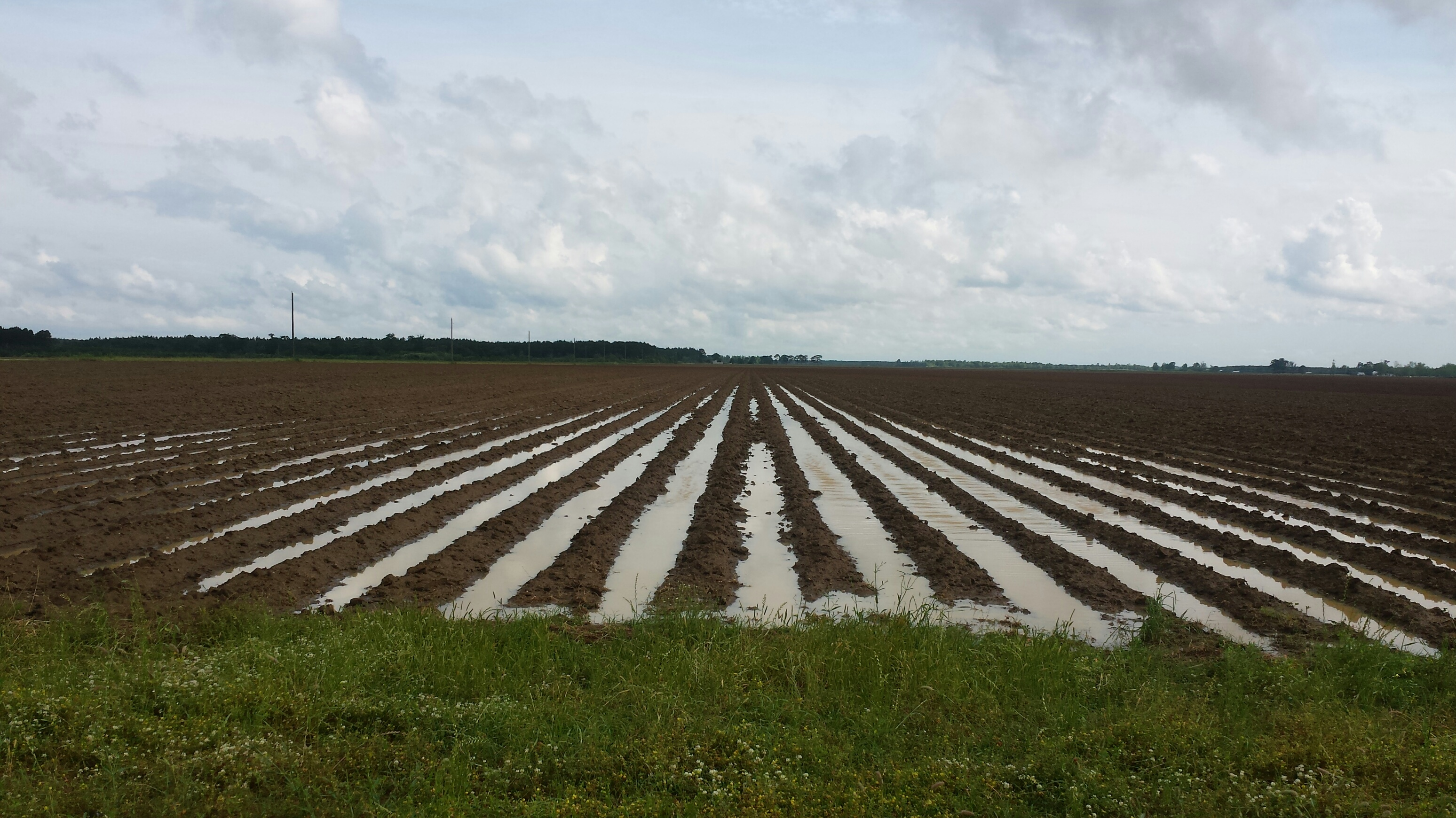 Saturated soils that had been prepared for planting.