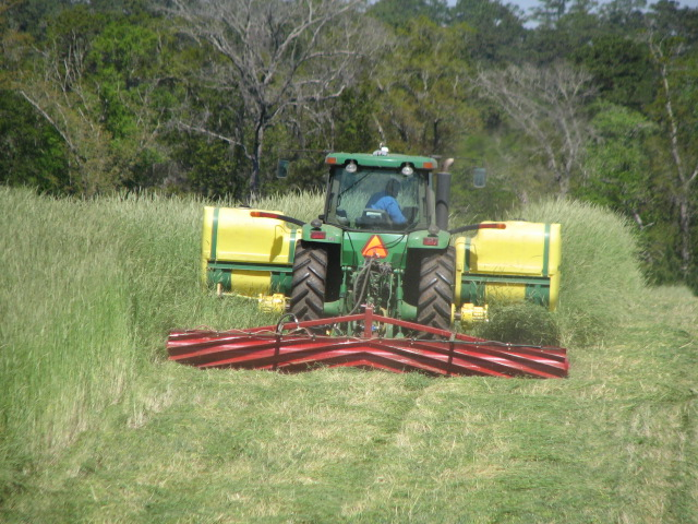 Rolling down rye cover crop on April 1