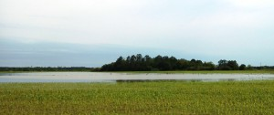 Standing water in corn field in Okaloosa County