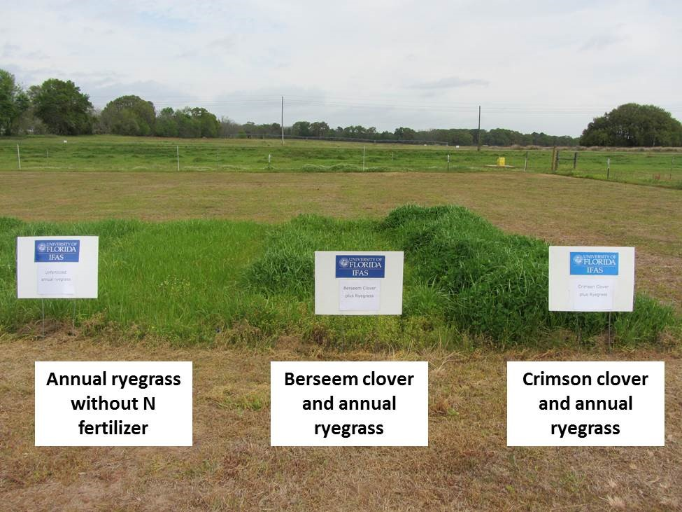 Annual ryegrass and cool-season legume mixtures contrasted with annual ryegrass without N fertilizer; Marianna, FL, Apr. 2014. Photo by Jose Dubeux on April 7 2014.