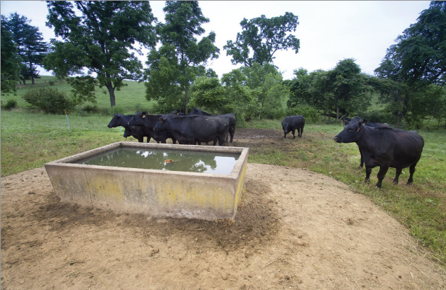 EQIP frunds can provide cost share funds for conservation practices such as a water trough in a pasture keeps cattle out of critical riparian area.