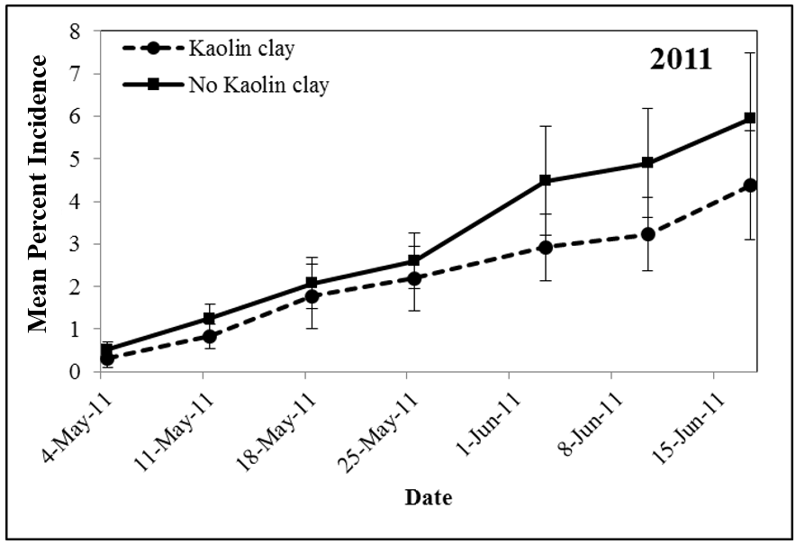 Figure 3. Mean percent incidence of Tomato spotted wilt virus in tomato plots in 2011 that did or did not receive applications of kaolin (adapted from Tyler-Julian et al. 2014. Acta Horticulturae, in press)