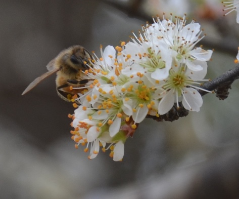 Health honeybee hives will be working the Spring 2015 bloom in a few short months.