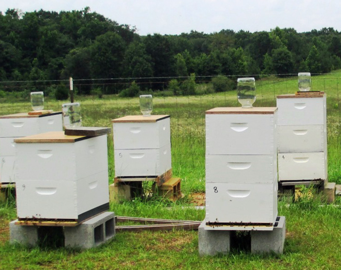 According to USDA 2014 was a good year for US beekeepers with both record high prices and also an increase in total production.  Photo credit: Doug Mayo