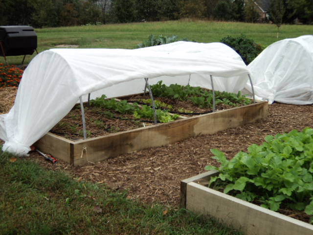 An example of a low tunnel integrated into a raised bed. Photo credit – Fran Scher