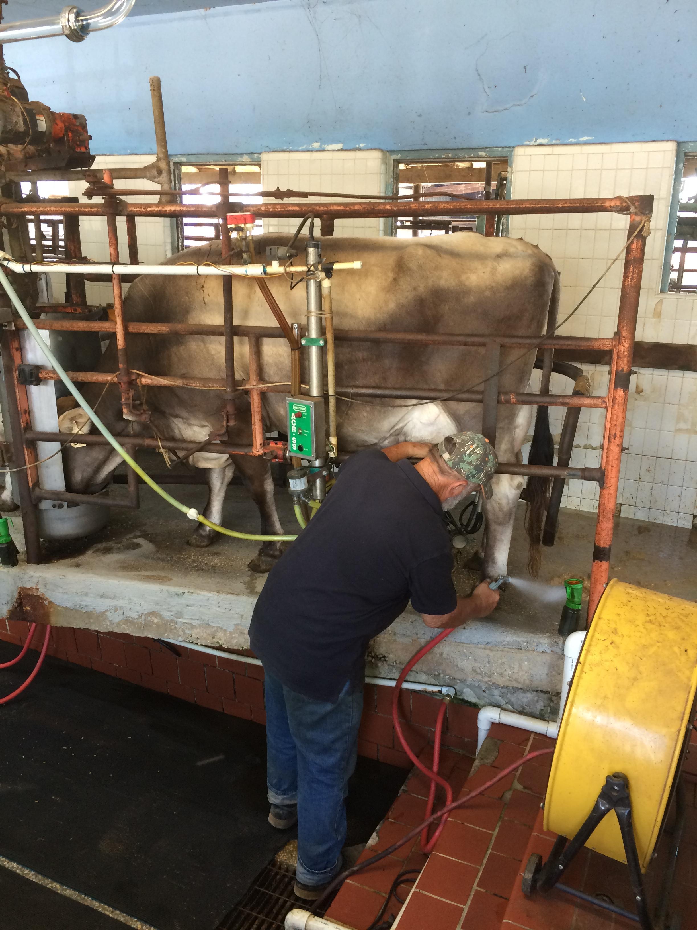 Sigafoose Dairy Farm in Escambia County.  Photo Credit: Hank Bignell