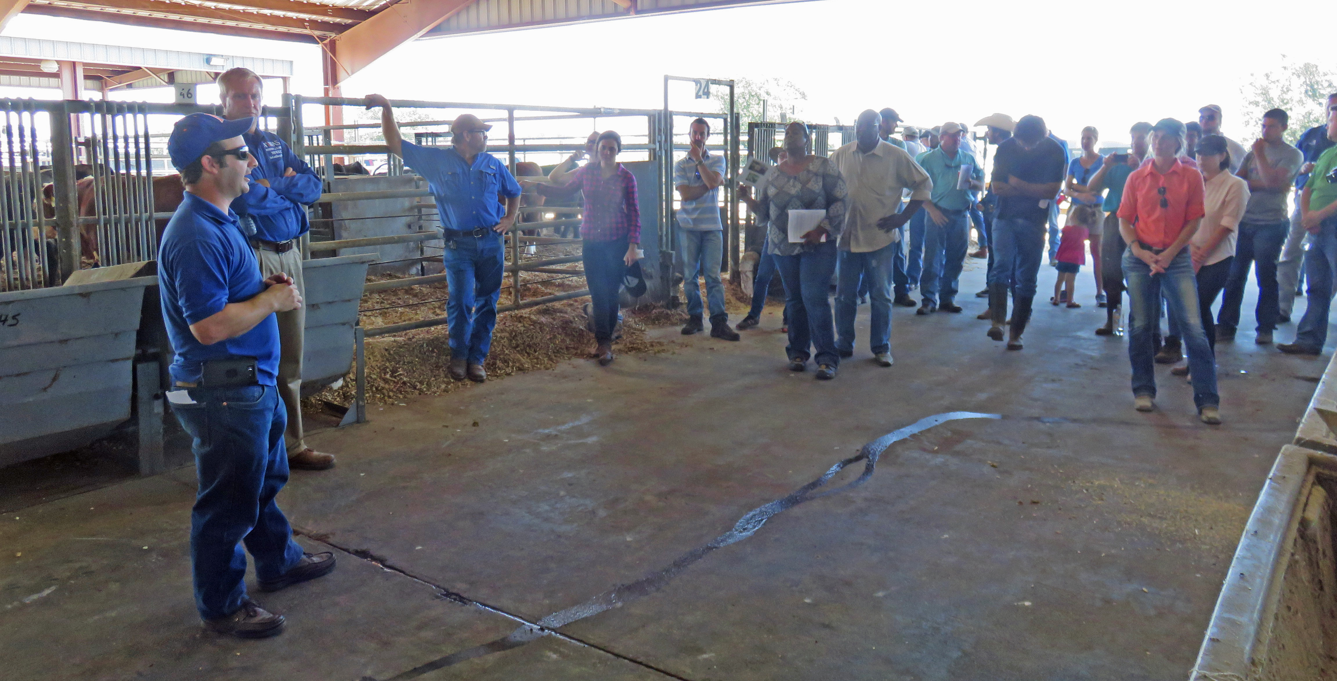 Nicoals DiLorenzo and Cliff Lamb shared how they use the Feed Efficiency Facility at the Beef Unit to evaluate the Florida Bull Test Bulls as well as new feed additives to identify cattle that perform well on less feed. Photo Credit Doug Mayo.