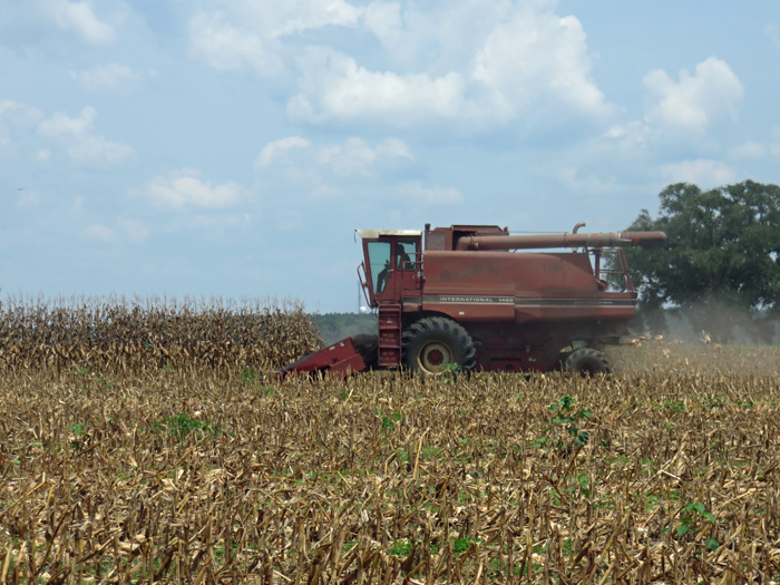 Combines are rolling along at Dietrich Farms in Jackson County this week.  Photo credit:  Doug Mayo