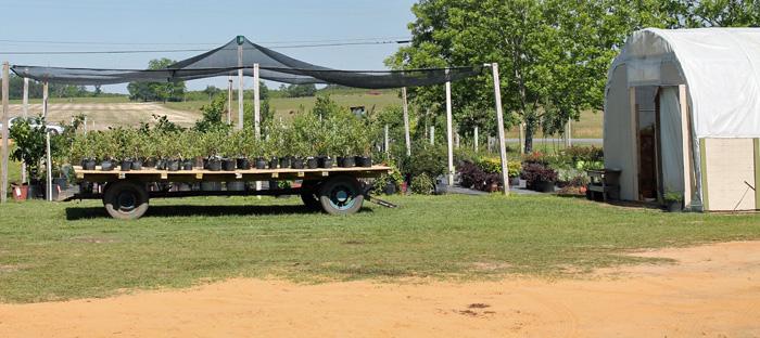 Maphis plant nursery
