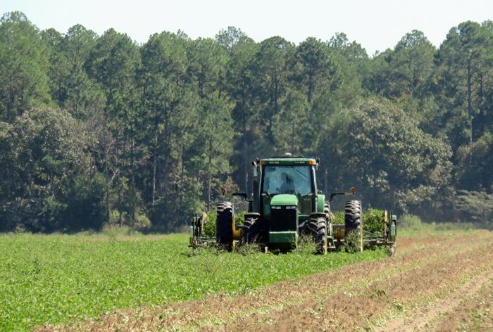 Peanut being dug after sunshine returned to Jackson County. Photo credit: Doug Mayo