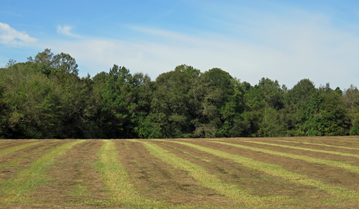 Hay drying in the warm sunshine of October. Photo credit: Doug Mayo