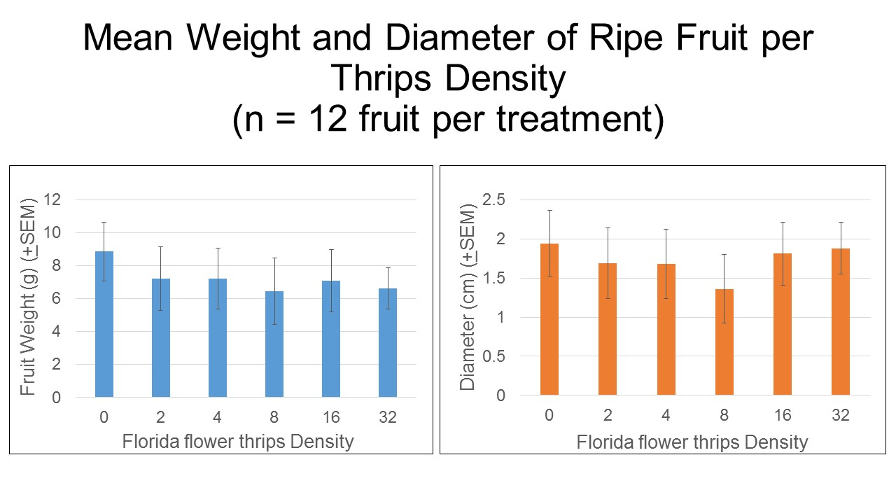 Figure 4. Relationship between thrips density on fruit weight and diameter of strawberry in laboratory experiments. Photo credit: Iris Strzyzewski