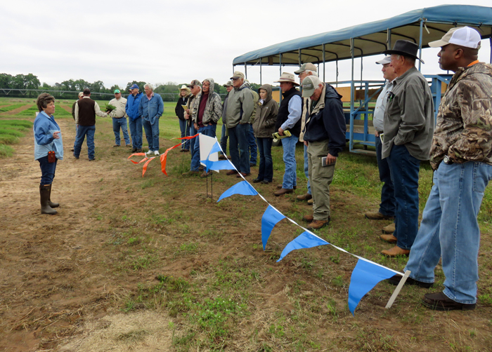 Ann Blount discusses warm-seson forage options for the Panhandle. Photo credit: Doug Mayo