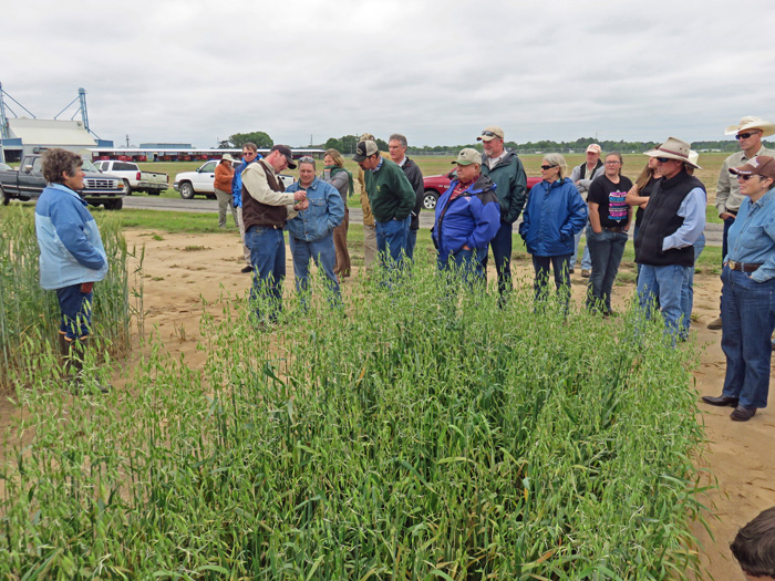 Mark Mauldin shows racnhers how to identify rust on oats. Photo credit: Doug Mayo