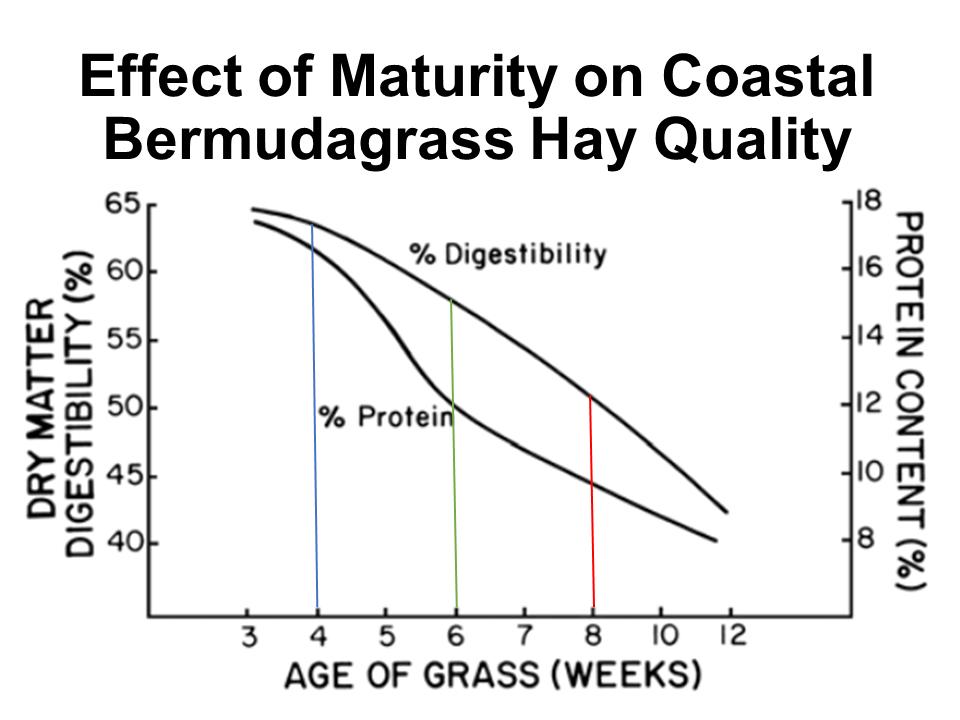 Effect of Maturity of Coastal Bermudagrass
