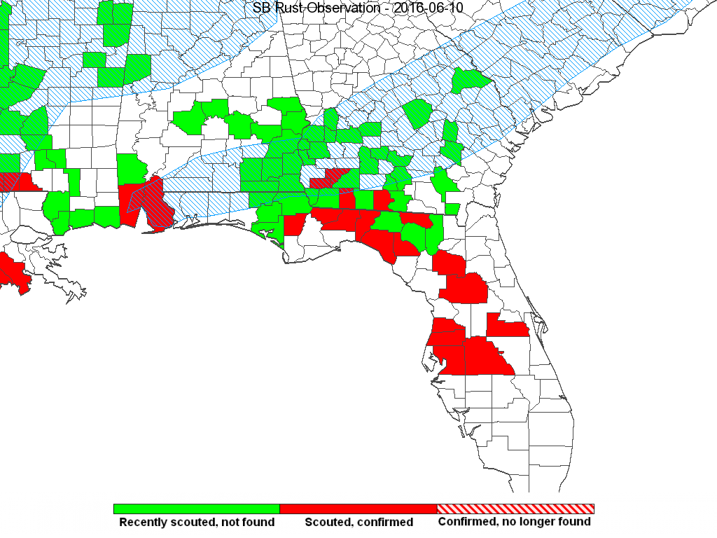 Soybean rust (SBR) was found in a soybean sentinel plot in Gadsden County, Florida on June 2. This is the first discovery of SBR on soybeans in Florida this year. SBR was also found on kudzu in Miller, Baker, Grady and Brook's counties in southwestern Georgia.