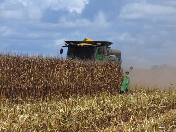The combine was running hard harvesting field corn this week near Greenwood, FL at Bishop Farms.