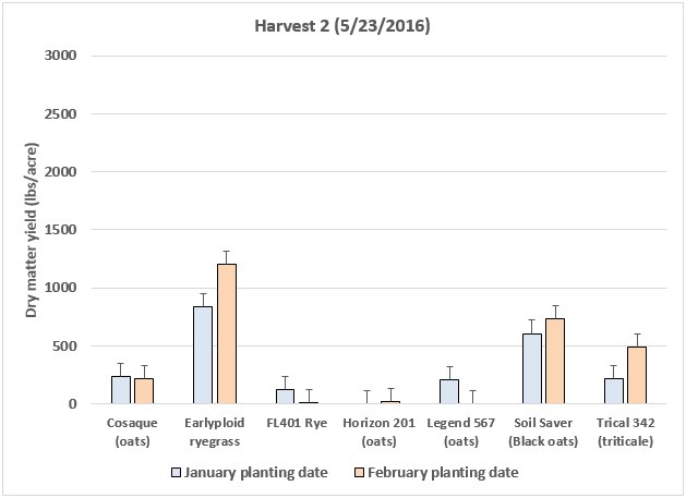 Figure 3. Dry matter yield of cool-season grasses planted in January or February 2016 in North Florida (UF/IFAS NFREC, Marianna, FL). Data from second harvest (5/23/2016).